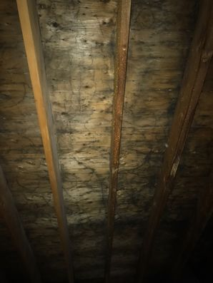 Mold Removal East Longmeadow MA (2)