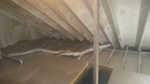 Mold Removal & Attic Insulation in Lynn MA (2)